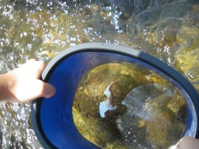 2014/07/27 水辺の探検3