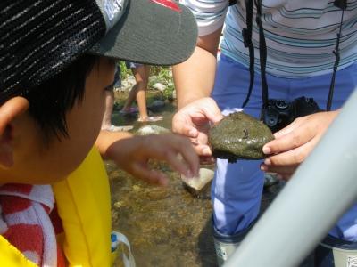 2014/07/27 水辺の探検4